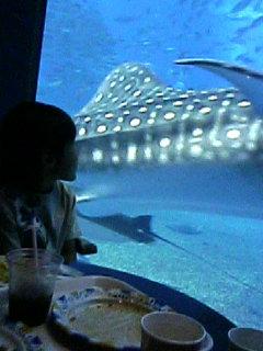 6月3日 ちゅら海水族館へ♪